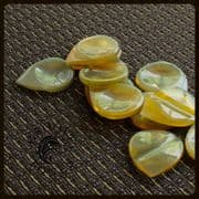 Clear Buffalo Horn Guitar Pick Collection | Timber Tones